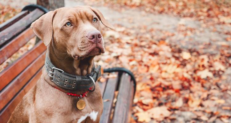 How does a GPS dog collar work