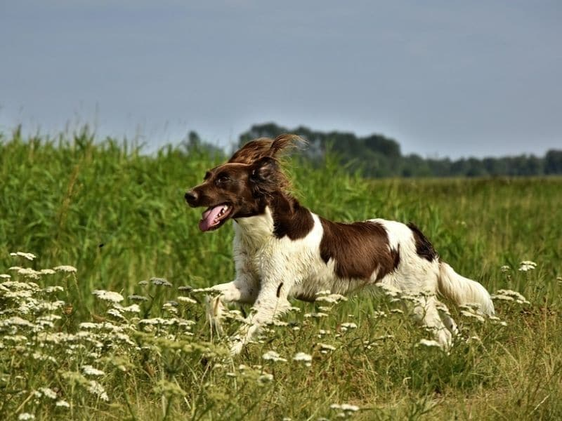 8 Ways to Get Your Dog Fit and Healthy