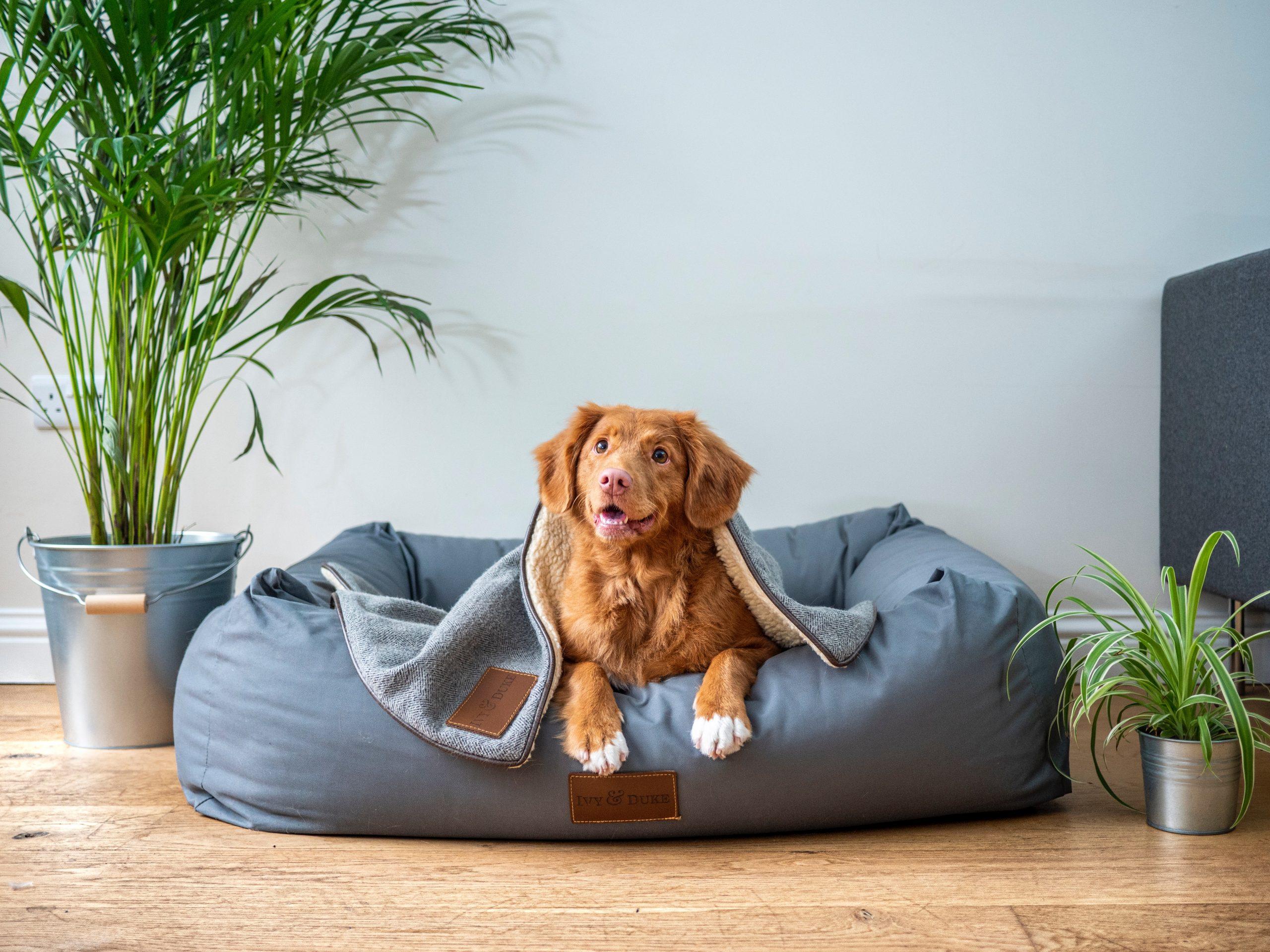orthopedic dog beds